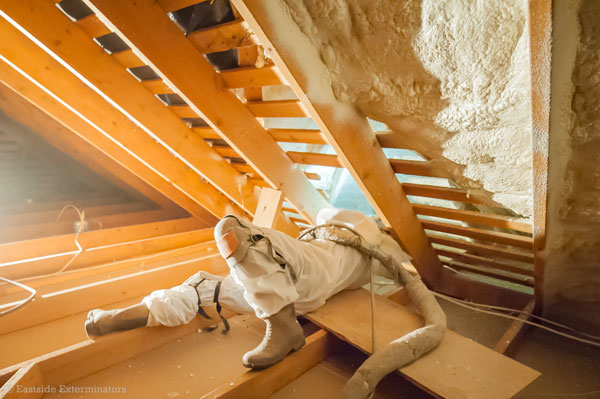 spray foam insulation experience